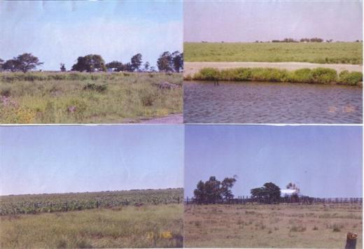 PALUD & ASOCIADOS, Venta de Campo en    Vera