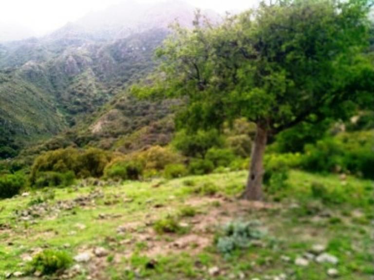 Venta de Campo en   Villa Larca